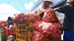 Nhà nông cay đắng đổ bỏ hàng trăm tấn hành tây