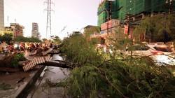 Hà Nội lên phương án ứng phó cây đổ khi mưa bão
