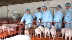 Liên kết - giải pháp để sống sót cho ngành chăn nuôi