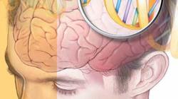 Gene ảnh hưởng đến khả năng ngôn ngữ