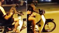"""Nam thanh niên để chó """"lái"""" xe máy sẽ bị xử lý thế nào?"""