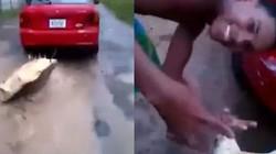 Video: Rùa quý khổng lồ bị kéo sau ô tô gây phẫn nộ