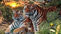 Đố bạn có bao nhiêu con hổ trong bức ảnh