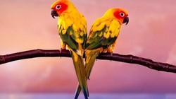 Top 10 giống vẹt đẹp nhất thế giới