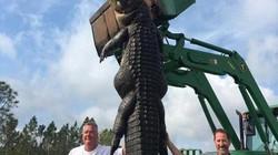 Mỹ: Tiêu diệt cá sấu khổng lồ bí mật ăn bò của dân