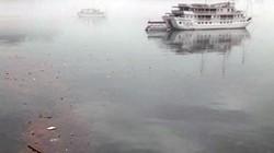 Hàng chục tấn dăm gỗ đang trôi nổi trên mặt vịnh Hạ Long