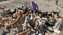 Người đàn ông ở trong chuồng cùng 150 con chó