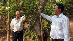 Nhiều mô hình sản xuất tiên tiến cho nông dân Bình Phước