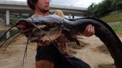 Hồng Kông: Bắt được cá trê khổng lồ trên sông đen ngòm