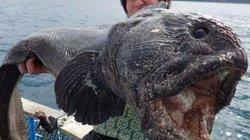 10 loài quái vật biển sâu kỳ dị nhất hành tinh