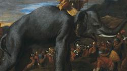 Danh tướng Hannibal và bí ẩn 2.000 năm hé lộ nhờ... phân ngựa