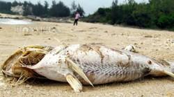 Nỗi buồn của nông dân Việt
