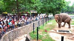 Vườn thú Hà Nội trông giữ xe miễn phí trong 4 ngày nghỉ lễ