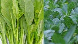 """Những loại rau củ mùa hè """"tắm"""" nhiều hóa chất nhất chợ"""