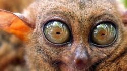 99,99% loài trên Trái đất vẫn bí ẩn với con người