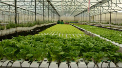 """Nông nghiệp công nghệ cao - """"nam châm"""" hút FDI"""