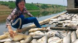 Bộ TNMT lập tổ điều tra ô nhiễm môi trường nước sông Bưởi