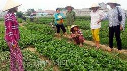 Vụ 'dùng chổi quét lên rau': Dân tố phóng viên dàn dựng có chủ đích