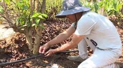 Giải pháp chống hạn cho cây trồng trong mùa khô