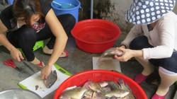 Người dân ngại ăn, giá hải sản giảm