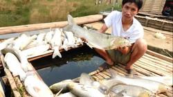 Mẫu nước sông Bưởi vượt chỉ tiêu cho phép nhiều lần