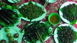 """Những món """"đặc sản"""" từ côn trùng ở miền Tây xứ Nghệ"""