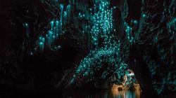 Lạc giữa hang động đom đóm kỳ ảo ở New Zealand