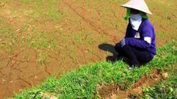 Thiếu nước tưới sản xuất: Ruộng bỏ hoang, nhà nông lo đứt bữa