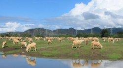 10 điểm đến níu chân du khách ở Phan Rang