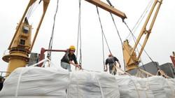 Trung Quốc trực tiếp kiểm tra gạo xuất khẩu Việt Nam