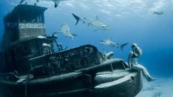 Người đẹp mạo hiểm một mình lặn giữa bầy cá mập