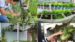 """Những vườn rau """"nhỏ mà có võ"""" của nông dân phố"""