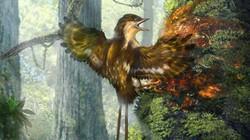 Cánh chim 60 triệu năm trước nguyên vẹn như còn sống
