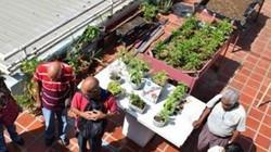 Nuôi gà, trồng rau trên ban công trong thành phố để cứu đói