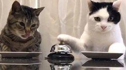 """Video mèo dùng chuông """"ra lệnh"""" cho người cực đáng yêu"""