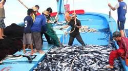 Choáng với ngư dân Bình Định: Cứ ra khơi là thành tỷ phú