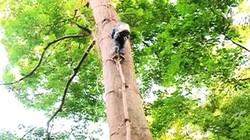 """Clip: """"Thót tim"""" thợ săn treo mình trên cao 30m lấy mật ong rừng"""
