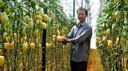 Đầu tư 50 tỷ đồng trồng các cây tiền tỷ đẹp như mơ
