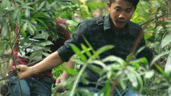 Nhiều bạn trẻ băng rừng đu dây cáp lên khu di tích Đền Hùng