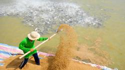 Từ 20.5: Không sử dụng kháng sinh trong thức ăn thủy sản