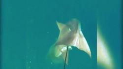 Video: Quái vật biển sâu trắng trợn cướp cá của thợ lặn