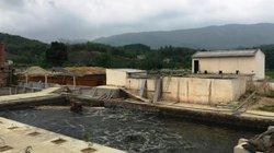 Vụ cá chết trên sông Âm: Xử phạt 160 triệu đồng DN xả thải trộm