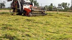 Tây Ninh: Thiệt hại 20 tỷ đồng từ một trận mưa trái mùa