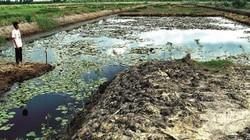 """Trăn trở vùng đất than bùn - """"túi"""" nghèo của xã An Khánh, U Minh"""
