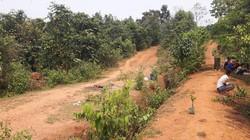 Vụ cô giáo tương lai nghi bị hiếp, giết: Tiếng thét tuyệt vọng giữa rừng