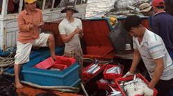 Đi chợ giữa biển Hoàng Sa (Kỳ 3): Chữ tín quan trọng hơn tiền
