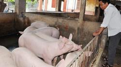 Bán được lợn mà như bị... mất cắp