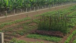 Lật lại vấn đề tích tụ đất đai trong nông nghiệp