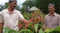 Ly kỳ chuyện 2 lão nông vào rừng tìm rau rừng vang danh cả Tây Ninh