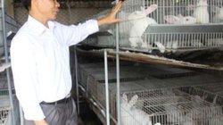 Nuôi thỏ bán cho Nhật Bản, dân nhanh giàu